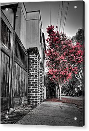 Crape Myrtles In Historic Downtown Charleston 2 Acrylic Print