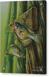Crappie And Bridge Support Acrylic Print by Jon Q Wright