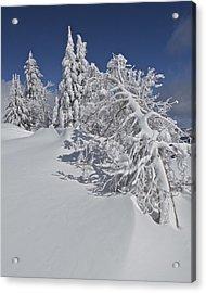 Crater Lake Trees 2 Acrylic Print