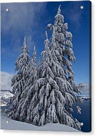 Crater Lake Trees  Acrylic Print