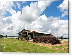 Crawfish Farm With Nets Acrylic Print