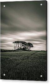 Crawton Copse Acrylic Print
