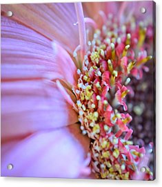 Acrylic Print featuring the photograph Crazy Enough by Penni D'Aulerio