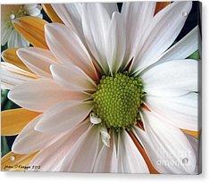 Acrylic Print featuring the photograph Creamsicle by Jean OKeeffe Macro Abundance Art