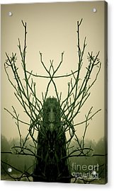 Creature Of The Wood Acrylic Print