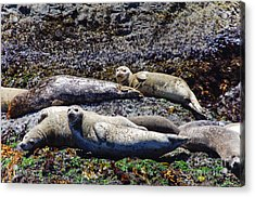 Creatures Comfortable Acrylic Print by Adria Trail