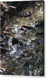Creek Bed Acrylic Print by William Norton