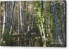Creek Guardians Acrylic Print by Terri Thompson