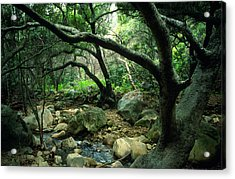 Creek In Woods Acrylic Print by Kathy Yates