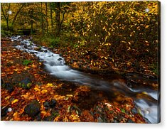 Creekside Colors Acrylic Print