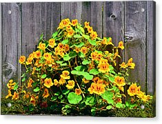 Acrylic Print featuring the photograph Creeping Hibiscus by Jon Exley