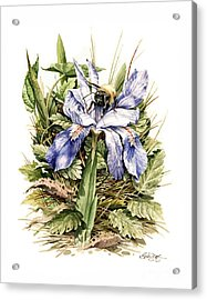 Acrylic Print featuring the painting Crested Dwarf Iris by Bob  George
