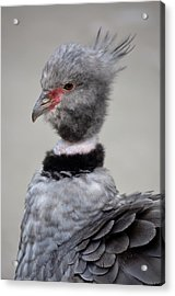 Crested Screamer Acrylic Print by Richard Bryce and Family