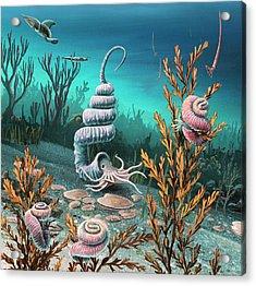 Cretaceous Heteromorph Ammonites Acrylic Print by Richard Bizley
