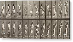 Cricketer Acrylic Print by Eadweard Muybridge