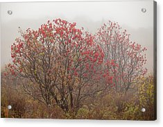 Crimson Fog Acrylic Print by Melinda Ledsome