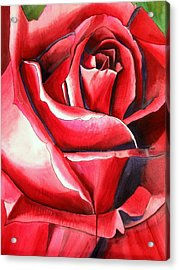 Crimson Glory Rose Acrylic Print by Sacha Grossel