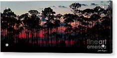 Crimson In The Pines Acrylic Print