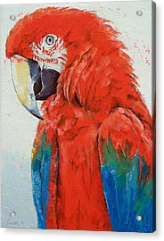 Crimson Macaw Acrylic Print by Michael Creese
