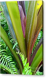 Acrylic Print featuring the photograph Crinum Lily And Ferns by Darla Wood