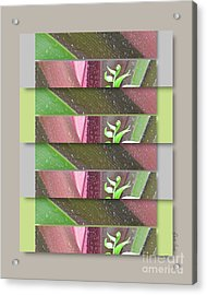 Acrylic Print featuring the photograph Crinum Lily Collage3 by Darla Wood