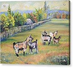 Croatian Goats Acrylic Print