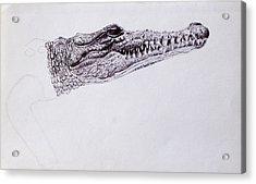 Croc Sketch Acrylic Print