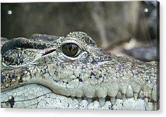 Acrylic Print featuring the photograph Crocodile Animal Eye Alligator Reptile Hunter by Paul Fearn