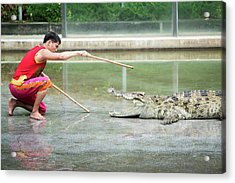 Crocodile Display Acrylic Print