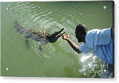 Crocodile Dundee Jamaica Acrylic Print by Olaf Christian