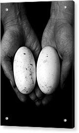 Crocodile Eggs Acrylic Print by Kim Lagerhem