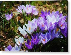 Crocus Fantasy Acrylic Print by David Lane
