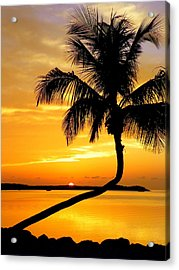 Crooked Palm Acrylic Print
