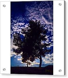 #crooked. #politician. #tree. #nature Acrylic Print