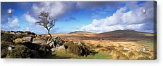 Crooked Tree At Feather Tor, Staple Acrylic Print by Panoramic Images