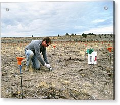 Crop Seedling Research Acrylic Print by Lori Ziegenhagen/us Department Of Agriculture