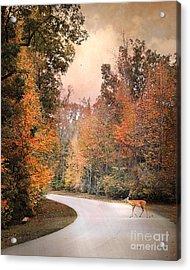 Crossing Over Acrylic Print by Jai Johnson