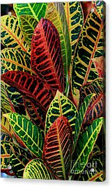 Acrylic Print featuring the photograph Croton Leafscape by Larry Nieland