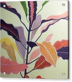 Croton Acrylic Print by Mary Adam