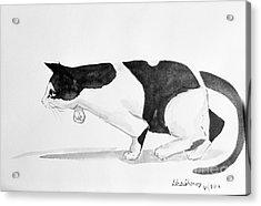 Crouching Cat Acrylic Print