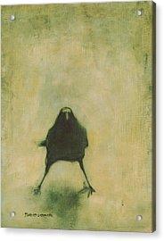Crow 6 Acrylic Print
