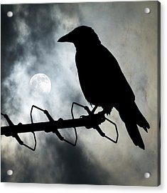 Crow Against A Moonlit Sky Acrylic Print
