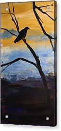 Crow IIi Acrylic Print