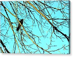 Acrylic Print featuring the photograph Crow by Kjirsten Collier