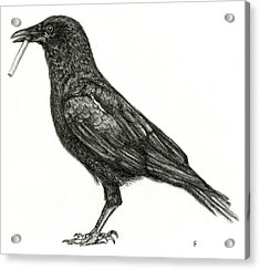 Acrylic Print featuring the drawing Crow by Penny Collins