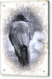 Crow Sketch Painterly Effect Acrylic Print by Carol Leigh