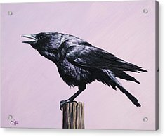 Crow - Sounding Off Acrylic Print by Crista Forest