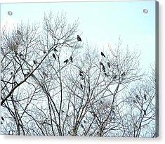 Crow Trees Acrylic Print