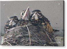 Acrylic Print featuring the photograph Crowded Nest by Wendy Coulson