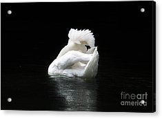 Crown Of Feathers Acrylic Print by Lynn Jackson